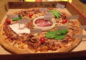 plant cell pizza