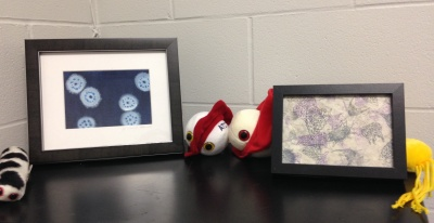Streptomyces watercolour (by artologica) & radiolarians print (by Nicole Edmonds)